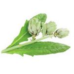 Artichaut feuilles bio 30g