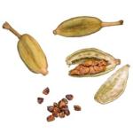 Cardamome semences bio 100g