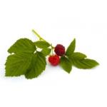 Framboisier feuilles bio 50g