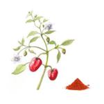 Paprika doux bio 100g