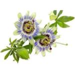 Passiflore plante bio 50g
