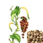 Poivre blanc grains bio 100g