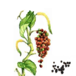 Poivre noirs grains bio 100g