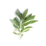 Sauge feuilles bio 50g
